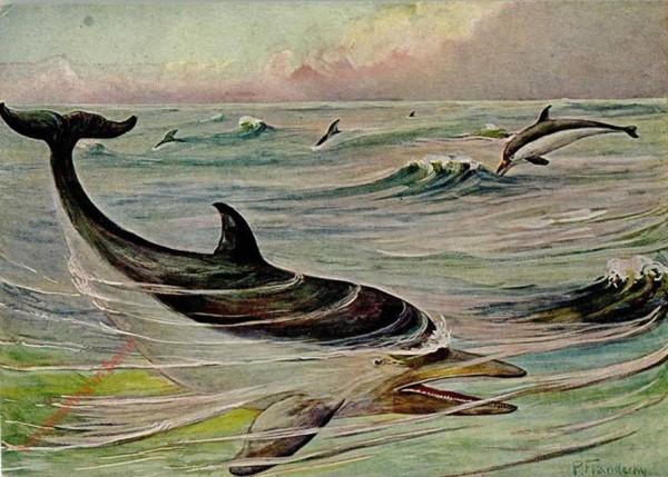 138 - Delphin