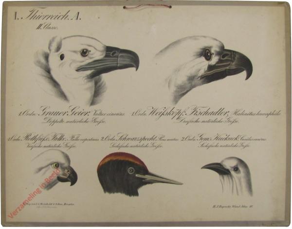10 - Fünf Vogelköpfe: Grauer Geier, weissköpfiger Fischadler, rothfüssiger Falke, Schwarzspecht, Kuckuck