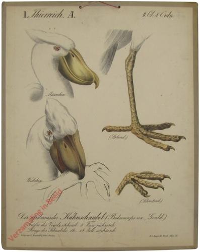 25 - De afrikanische Kahnschnabel