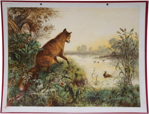 9 - Fuchs und Ente