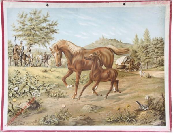 16 - Pferd und F�llen