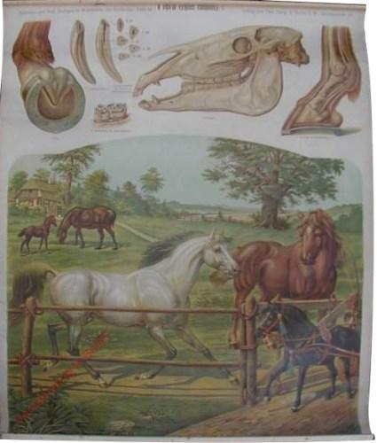 14 - Pferd