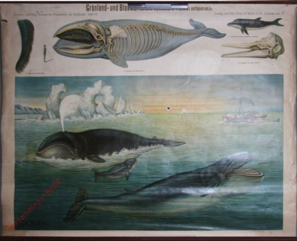 72 - Gr�nland und Blauwal