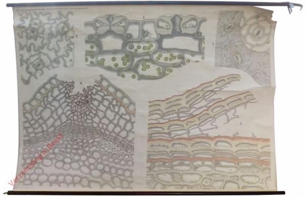 Anatomische Reihe, 5 - Das Hautgewebe II