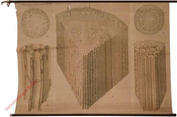 Anatomische Reihe, 7 - Das Leistungs- und Festikeitsgewebe