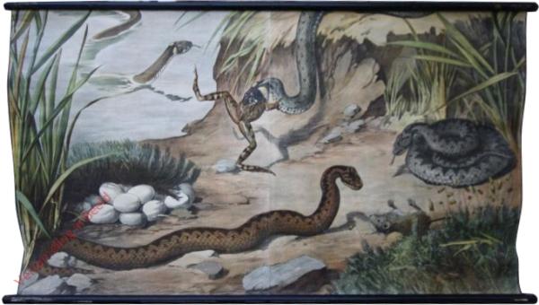 5 - Schlangen