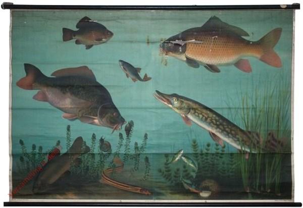 10 - S�sswasserfische