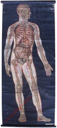 1 - [Röntgenplaat I]