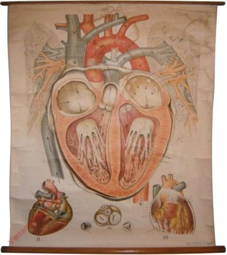 3 - Herztafeln I. Das gesunde Herz