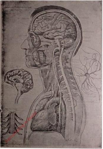 11 - [Centraal zenuwstelsel]