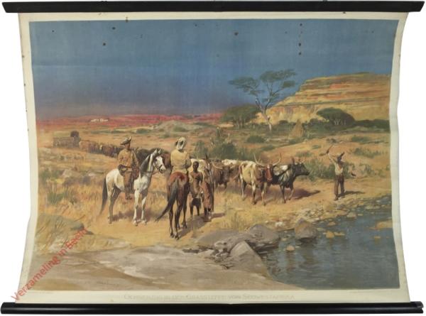 3 - Ochsenzug in der Grassteppe von Südwestafrika