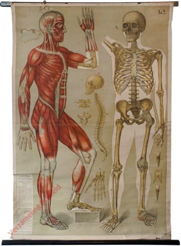 1&2 - Menselijk skelet, Spierstelsel