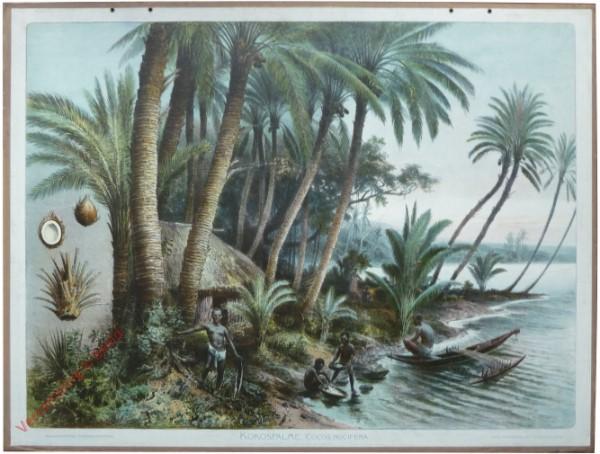 A.K. 11 - Kokospalme
