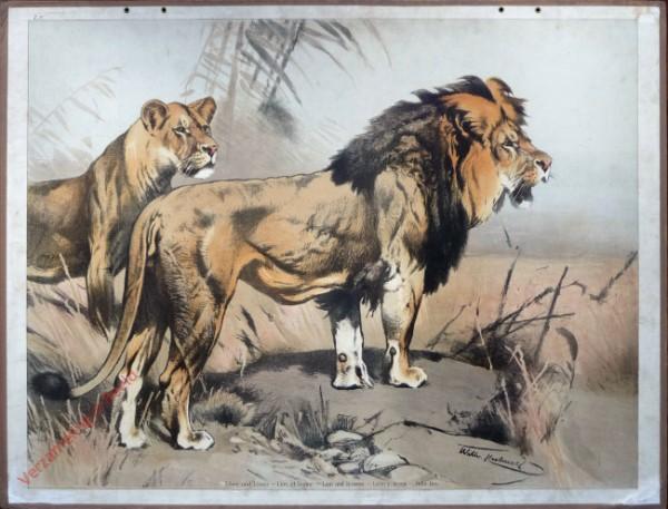 7 - L�we und L�win [Herzien]