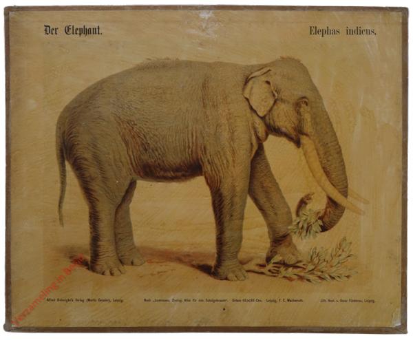 13 - Elefant