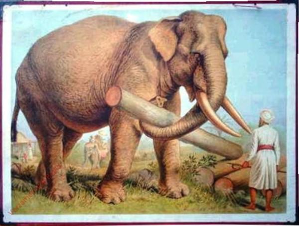 13 - Elefant [Herzien]