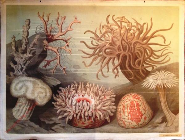 36 - Korallen und Seerosen