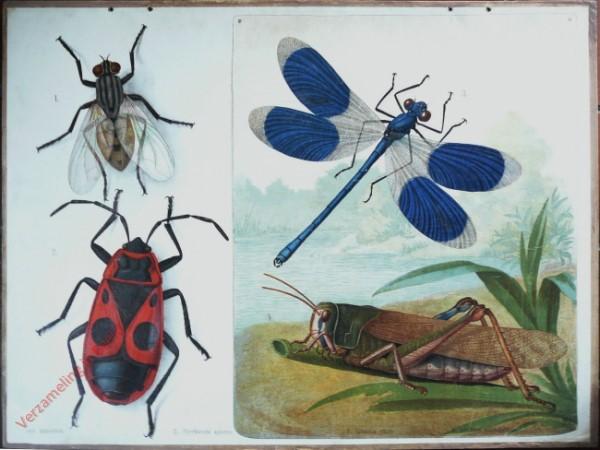 40 - Stubenfliege, Baumwanze, Libelle, Heuschrecke