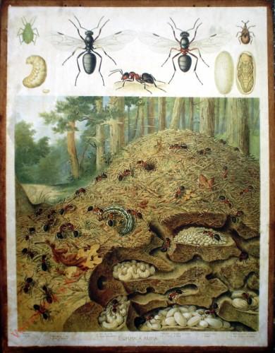 47 - Ameise mit Bau (Formica rufa)