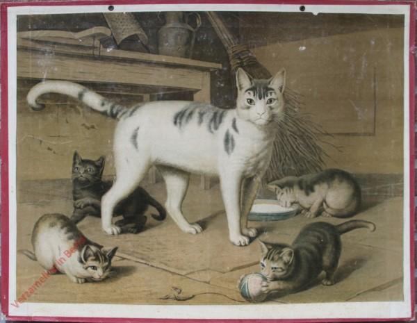 2 - Katze
