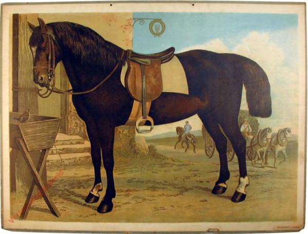 4 - Pferd