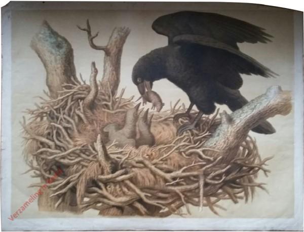 8 - Rabe (mit Nest)