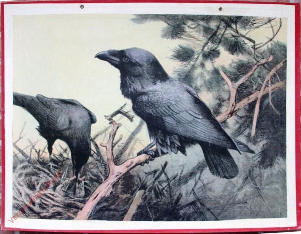 8 - Rabe (mit Nest) [Herzien]