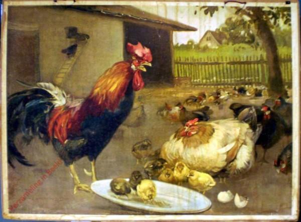 9 - Huhn [Herzien]