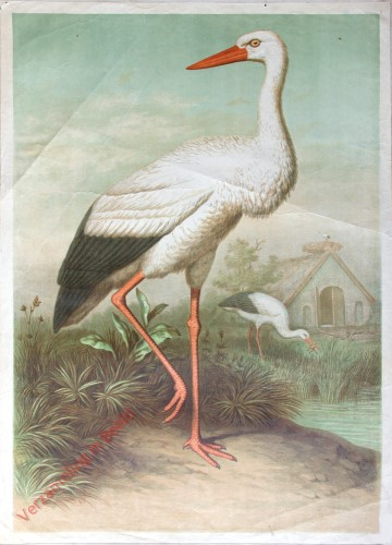 10 - Storch