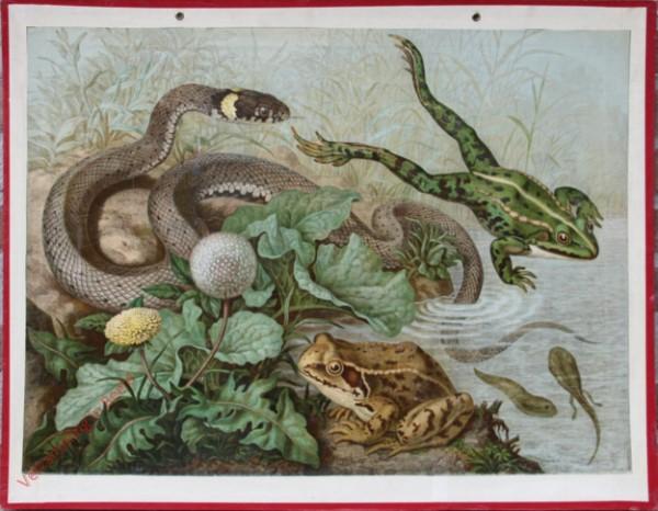 12 - Frosch und Schlange