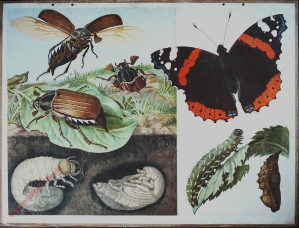 14 - Maikäfer und Schmetterling (mit Verwandlung)