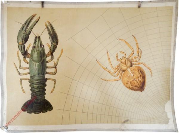 15 - Spinne und Krebs