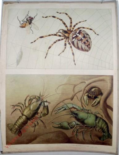 15 - Spinne und Krebs [Herzien]