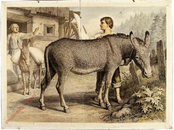 16 [suppl] - Esel