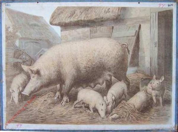 17 [suppl] - Schwein
