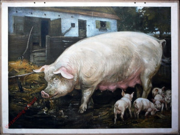 17 [suppl] - Schwein [Herzien]