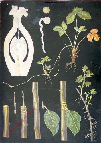 15 - Kasvien lisääntyminen