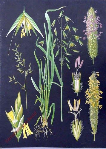 Uusi sarja - Heinäkasveja