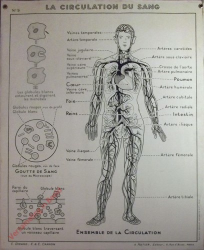 9 - La circulation du sang
