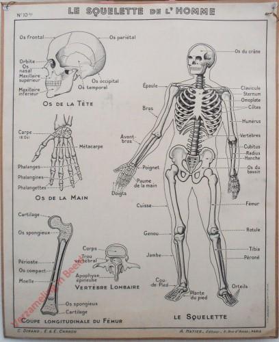 10bis - Le squelette de l'homme