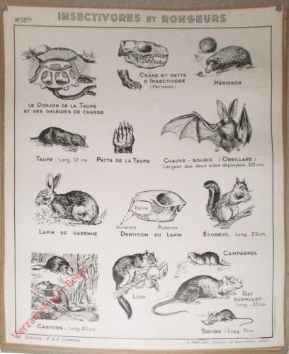 13bis - Insectivores et rongeurs