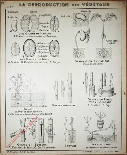 21bis - La reproduction des vegetaux