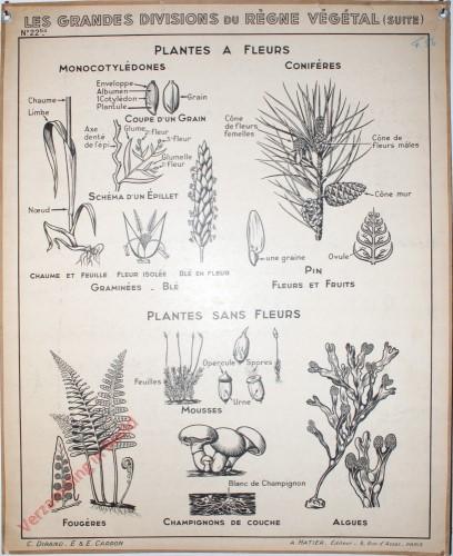 22bis - Les grandes divisions du Regne vegetal (suite)