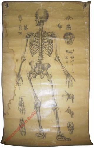 1 - Ostéologie, Syndesmologie. Plan antérieur