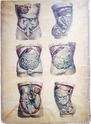 18 - Cavité abdomino-pelvienne. Ensembles des visceres digestifs