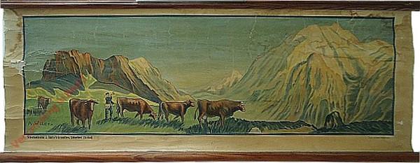 [Koeien hoeden in de bergen]
