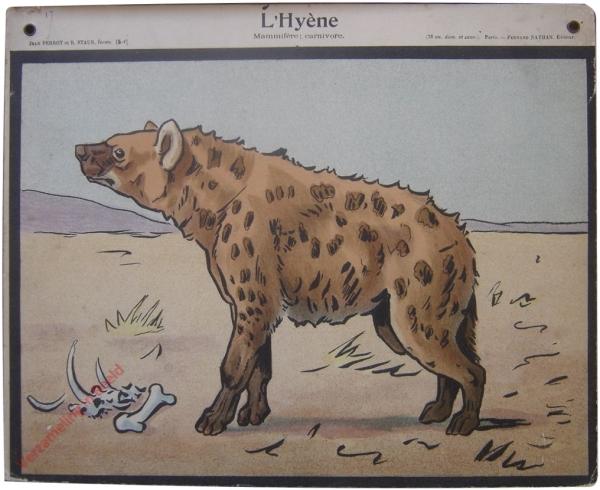 5-1 - L' Hy�ne. Mammif�re; carnivore