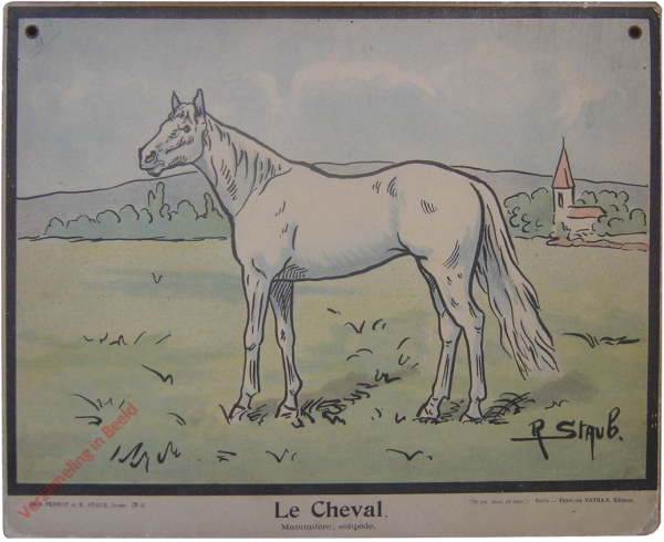 7-1 - Le Cheval. Mammif�re; solip�des