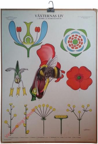 4 - Blomma och blomstallningar