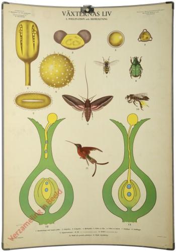 5 - Pollination och befruktning